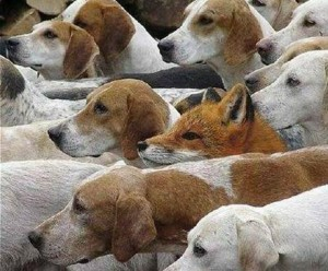 Boolean Search for IT Recrutiers: Be a Sly Fox